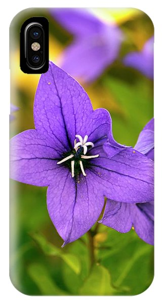 Cultivar iPhone Case - Platycodon Grandiflorus 'astra Blue' by Adrian Thomas