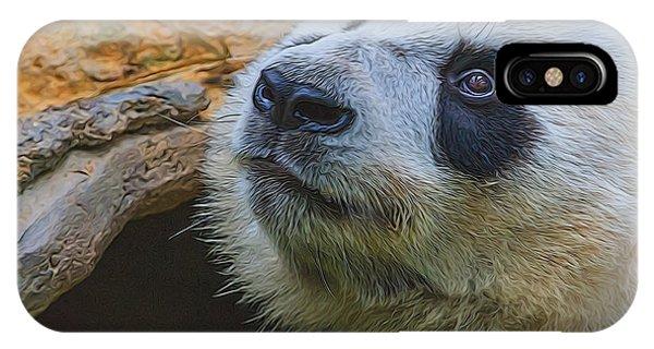Pleading Panda IPhone Case