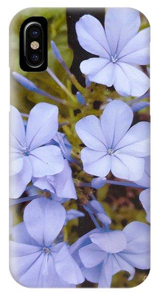 Plumbago Auriculata Or Cape Wort IPhone Case
