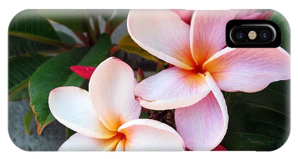 iPhone Case - Plumeria by Kelly Holm