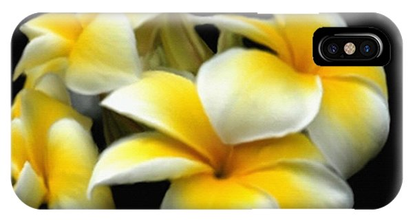 Plumeria Yellow And White IPhone Case