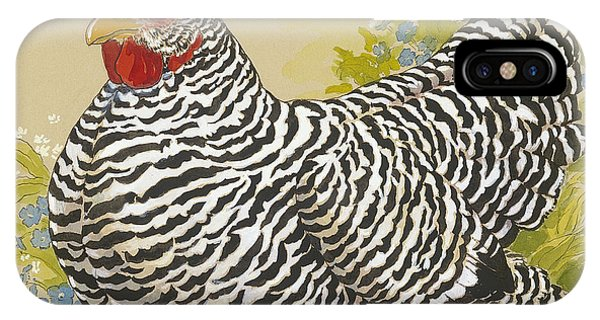 Barnyard iPhone Case - Plymouth Rock Hen 4 by Tracie Thompson