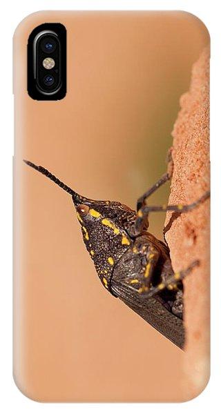 Psi iPhone Case - Poekilocerus Bufonius by Photostock-israel