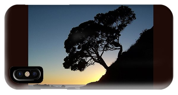Pohutukawa Trees At Sunrise IPhone Case