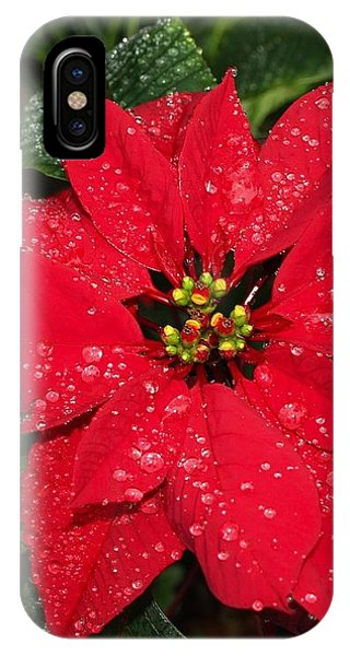 Poinsettia - Frozen In Time IPhone Case