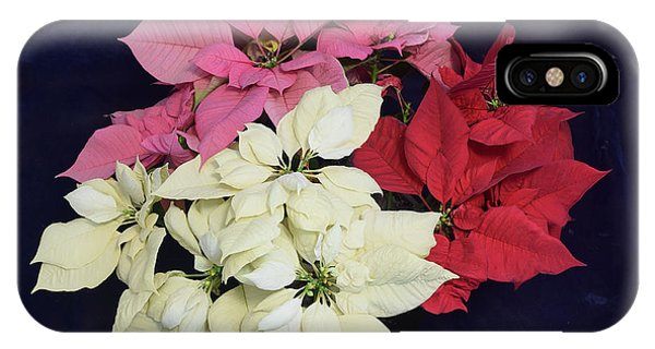 Poinsettia Tricolor IPhone Case