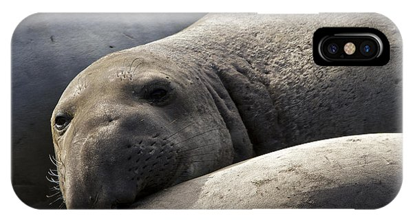 Point Piedras Blancas Elephant Seal 1 IPhone Case