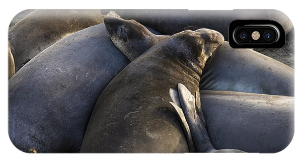 Point Piedras Blancas Elephant Seals 2 IPhone Case