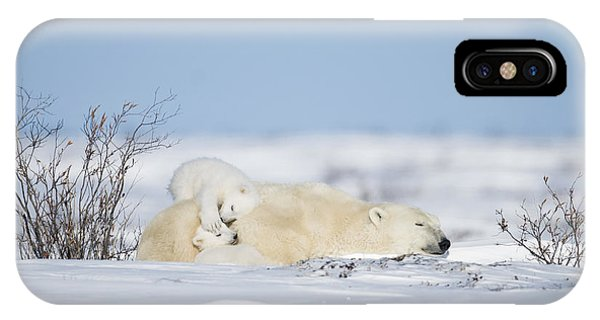 Polar Bear Cubs Play On Mothers Back IPhone Case