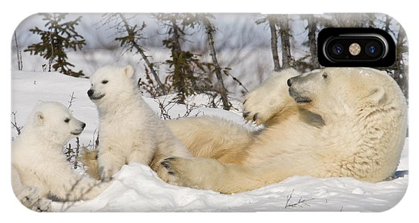 Polar Bear Family Playing In The Snow IPhone Case