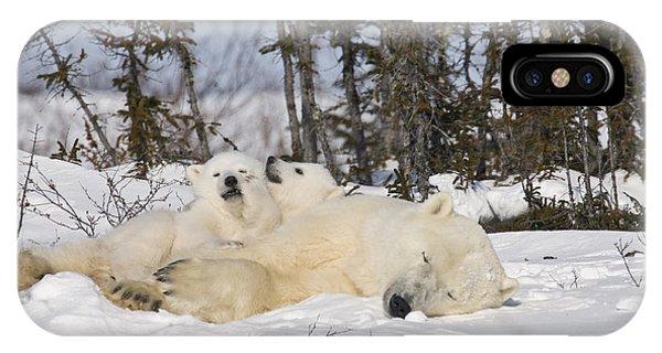 Polar Bear Family Resting IPhone Case