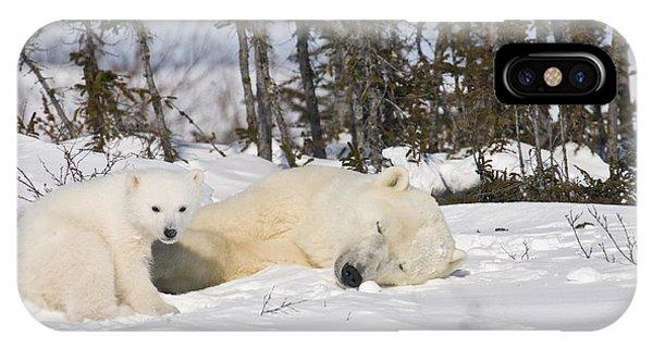 Polar Bear Mother Sleeps As Her Cub Looks Around IPhone Case