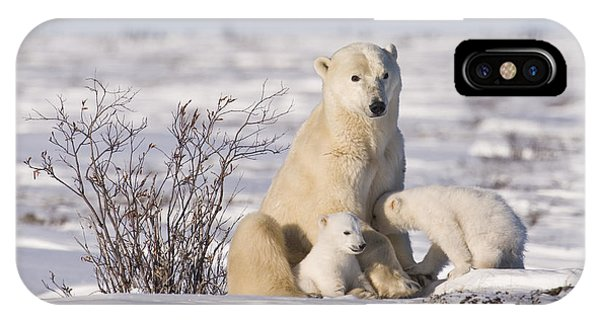 Polar Bear Nurses Cubs IPhone Case