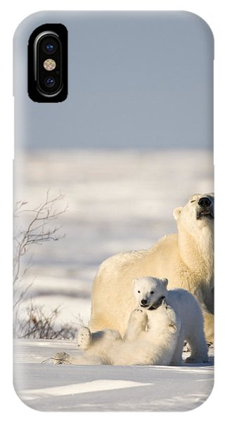 Polar Bear Watches Cubs Play IPhone Case