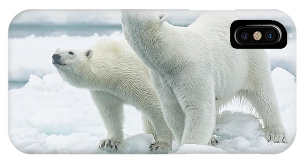 Ice iPhone Case - Polar Bears, Mother And Son by Joan Gil Raga