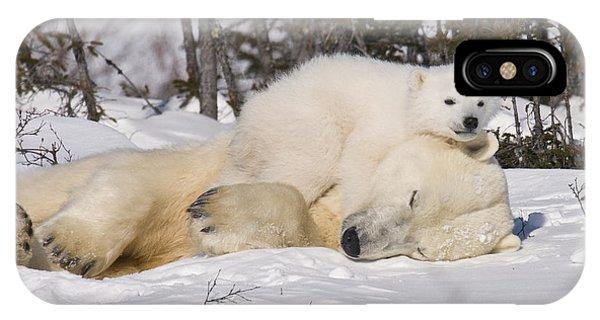 Polar Cub Hugs Its Sleeping Mother IPhone Case