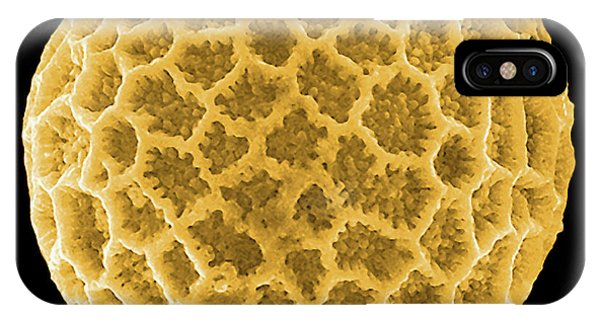 Pollination iPhone Case - Pollen Grain by Pascal Goetgheluck/science Photo Library