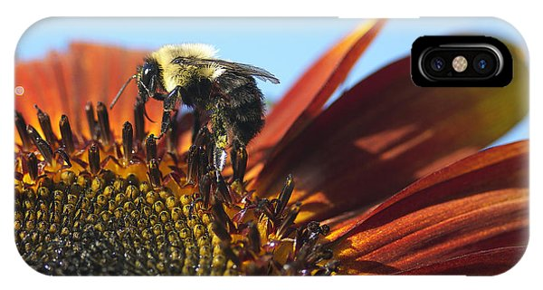 Honeybee iPhone X Case - Pollinating Sunflower Seeds by Sharon Talson