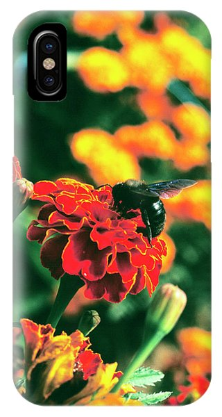 Pollination iPhone Case - Pollination by Antonia Reeve/science Photo Library