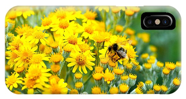 Pollination IPhone Case