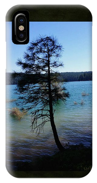 Pollock Pine IPhone Case