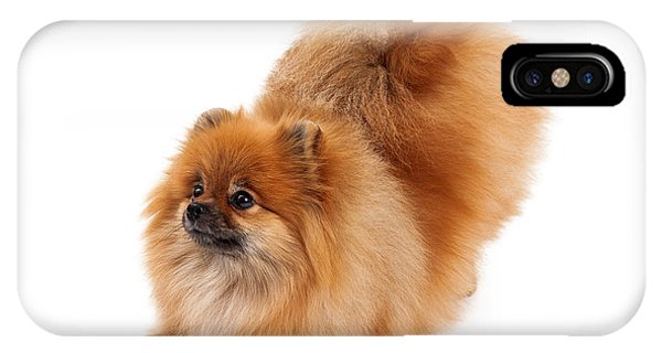Pomeranian iPhone Case - Pomeranian Bowing Looking To Side by Susan Schmitz