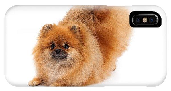 Pomeranian iPhone Case - Pomeranian In Downdog Position by Susan Schmitz