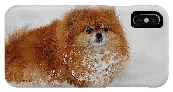 Pomeranian iPhone Case - Pomeranian In Snow by John Shaw
