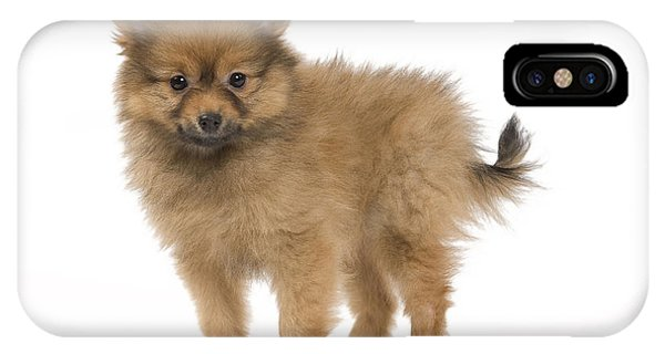 Pomeranian iPhone Case - Pomeranian Puppy Dog by Jean-Michel Labat
