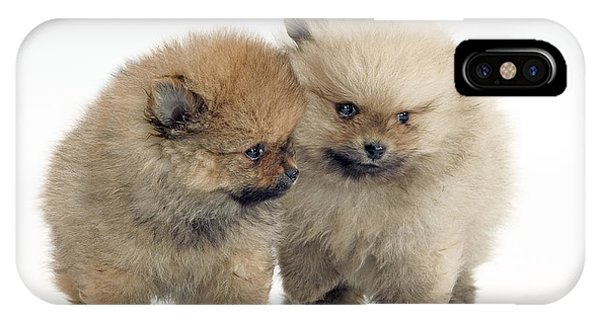 Pomeranian iPhone Case - Pomeranian Puppy Dogs by Jean-Michel Labat