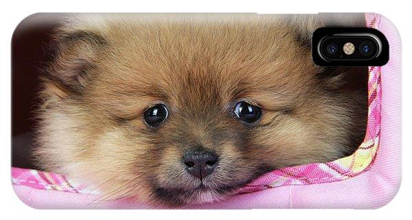 Pomeranian iPhone Case - Pomeranian Puppy by John Daniels