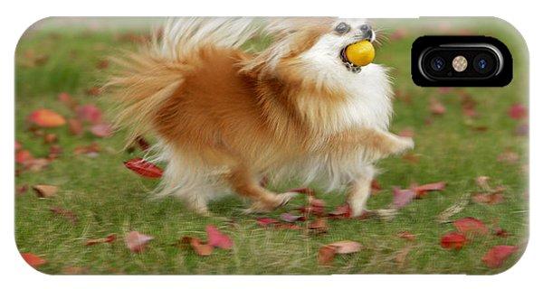 Pomeranian iPhone Case - Pomeranian Running by Rolf Kopfle