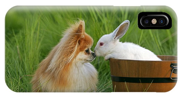 Pomeranian iPhone Case - Pomeranian With Rabbit by Rolf Kopfle