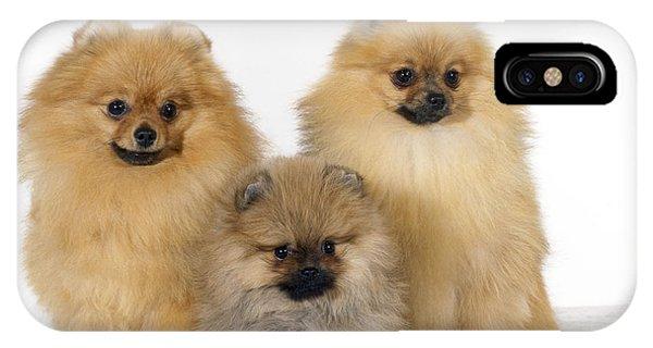 Pomeranian iPhone Case - Pomeranians by John Daniels