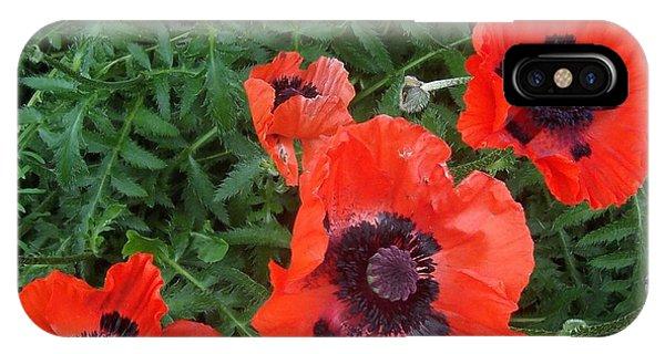 Poppies In June IPhone Case