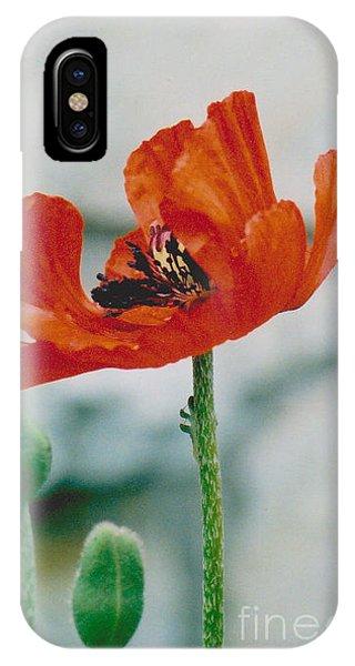 Poppy - 1 IPhone Case