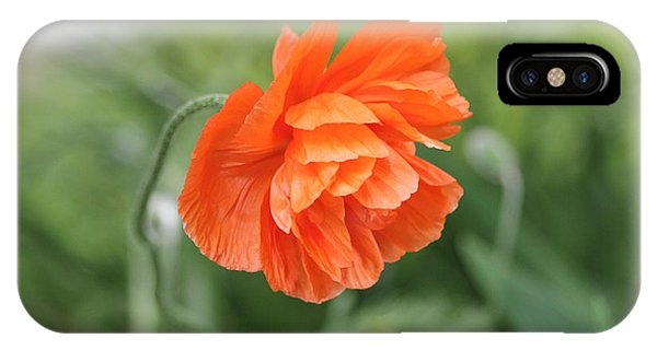 Poppy 2 IPhone Case