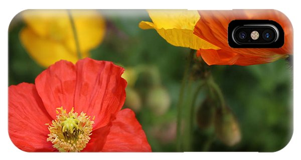 Poppy Iv IPhone Case