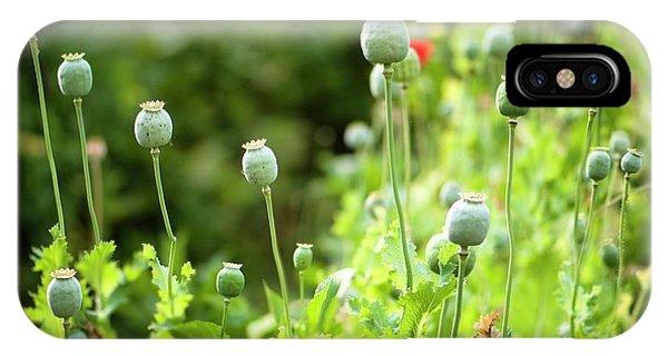 Cultivar iPhone Case - Poppy Seedheads by Maria Mosolova