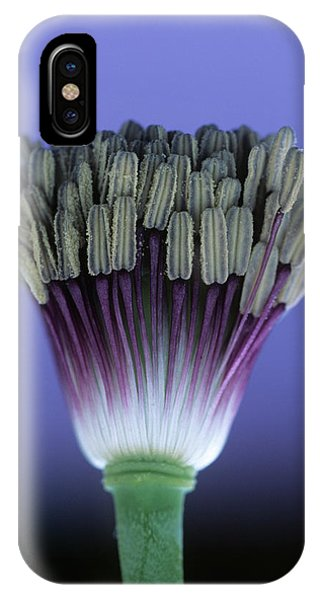 Stamen iPhone Case - Poppy Stamens (papaver Sp.) by Steve Taylor/science Photo Library