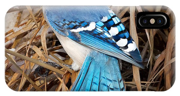Portrait Of A Blue Jay Square IPhone Case