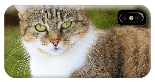 Portrait Of A Cat Phone Case by Angela Bruno