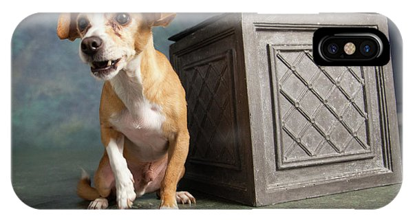 Chihuahua iPhone Case - Portrait Of A Chihuahua Mix Dog by Animal Images