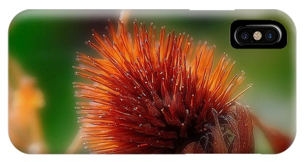 Portrait Of A Cone Flower IPhone Case