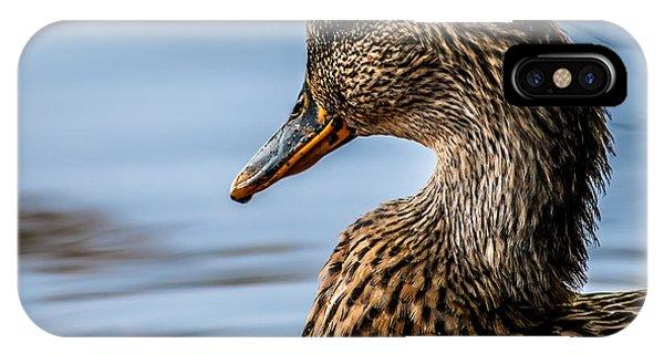Mallard iPhone Case - Portrait Of A Duck by Bob Orsillo
