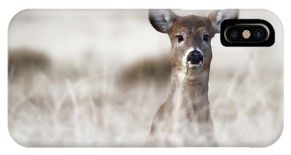 Portrait Of A Fawn IPhone Case