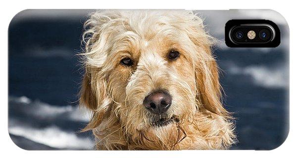 Portrait Of A Goldendoodle Sitting IPhone Case