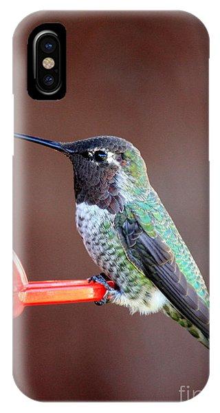 Beautiful Hummingbird iPhone Case - Portrait Of A Hummingbird by Carol Groenen