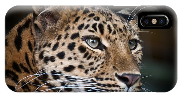 Portrait Of A Leopard IPhone Case