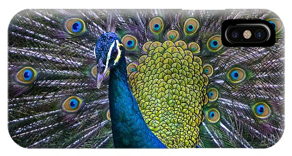 Portrait Of A Peacock IPhone Case